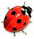 Itzeck Atorneys in Cape Town, Beetle